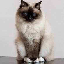 Gatti (e altro)