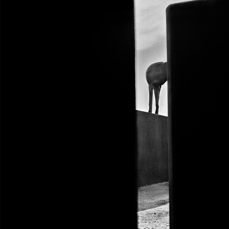 Hortus | 2007, L'hortus conclusus è il complesso di sculture installate dall'artista Mimmo Paladino nel 1982 nel giardino del chiostro universitario di S. Domenico in Benevento.