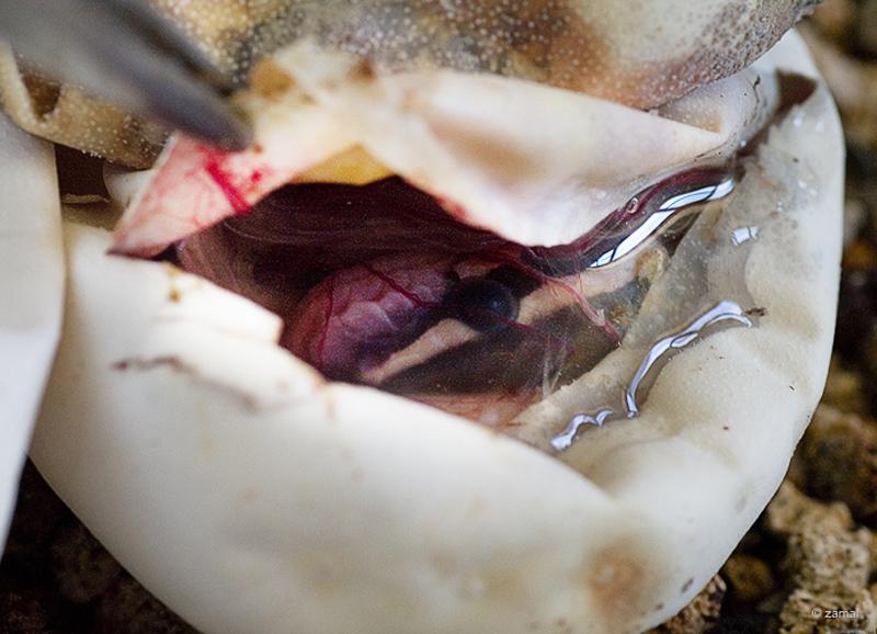 uno delle tre uova di serpente da cui sarebbe dovuto uscire un python regius...invece ha preferito ritardare la sua nascita...