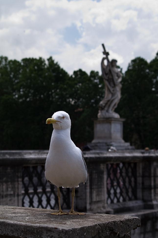 Roma - Curiosità